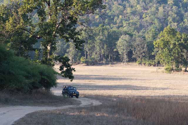 43 2010 Bandhavgarh